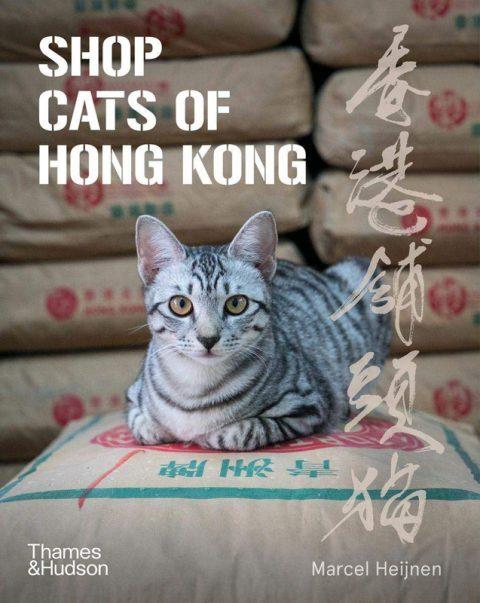 shop-cats-of-hongkong